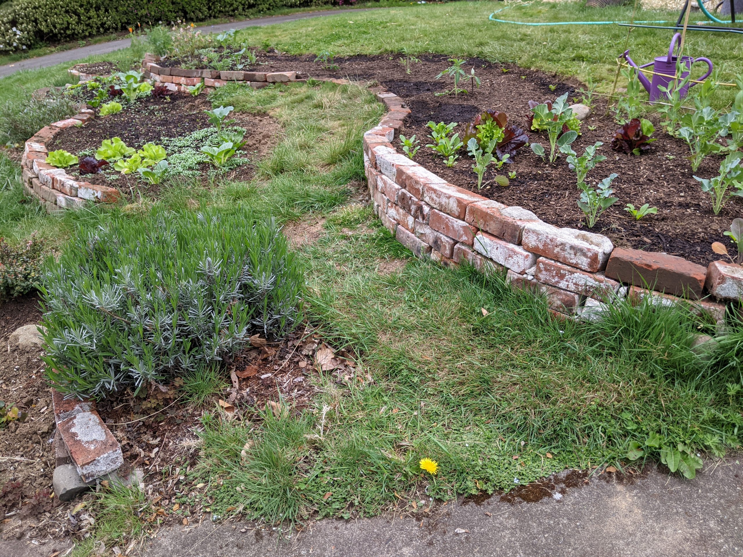 brick lined gardens in curved lines