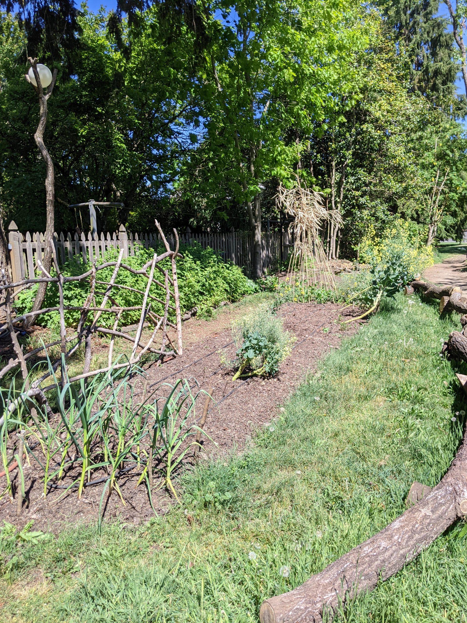 garden bed dug from grass