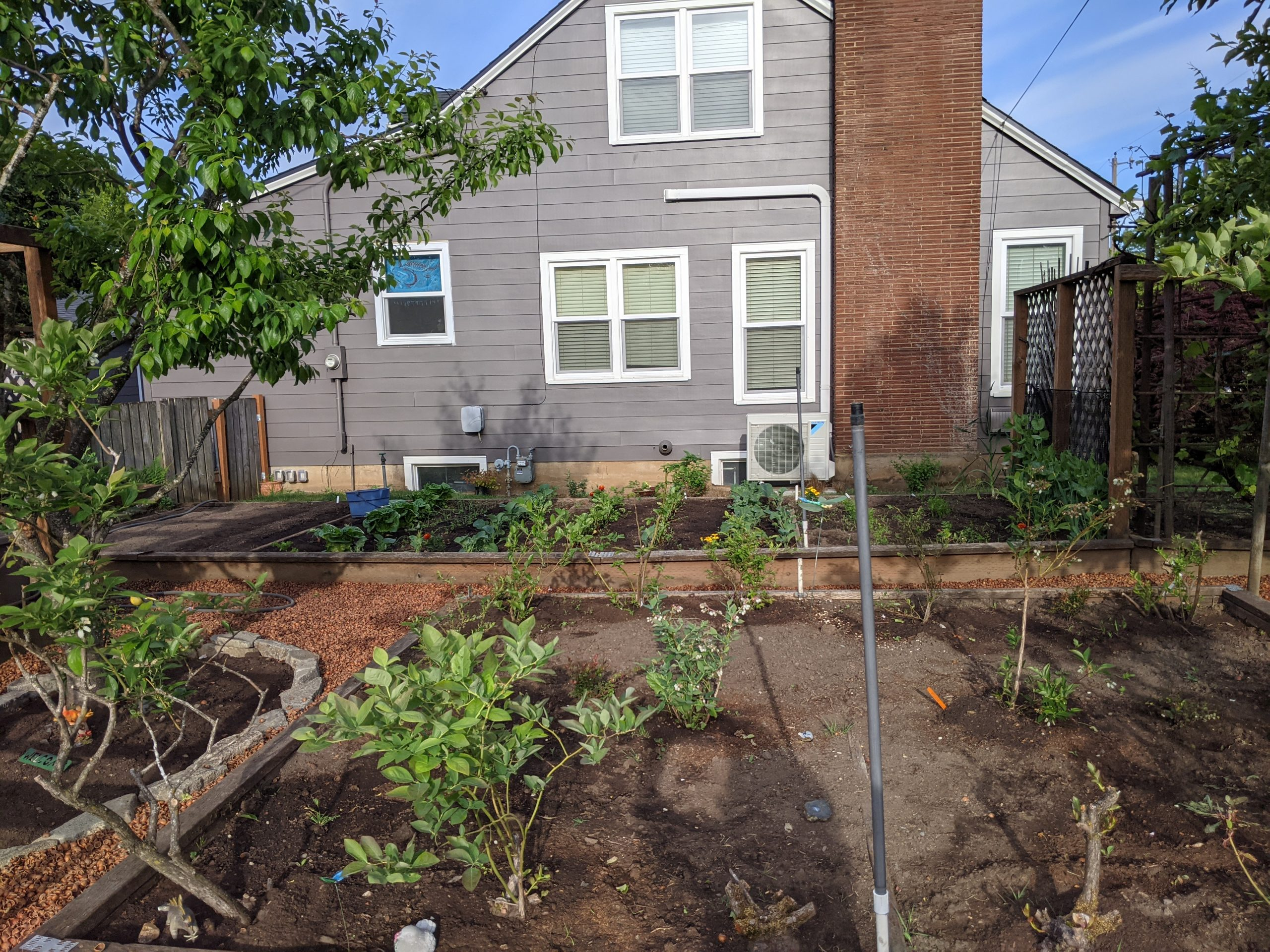 large garden beds with blueberries in foreground