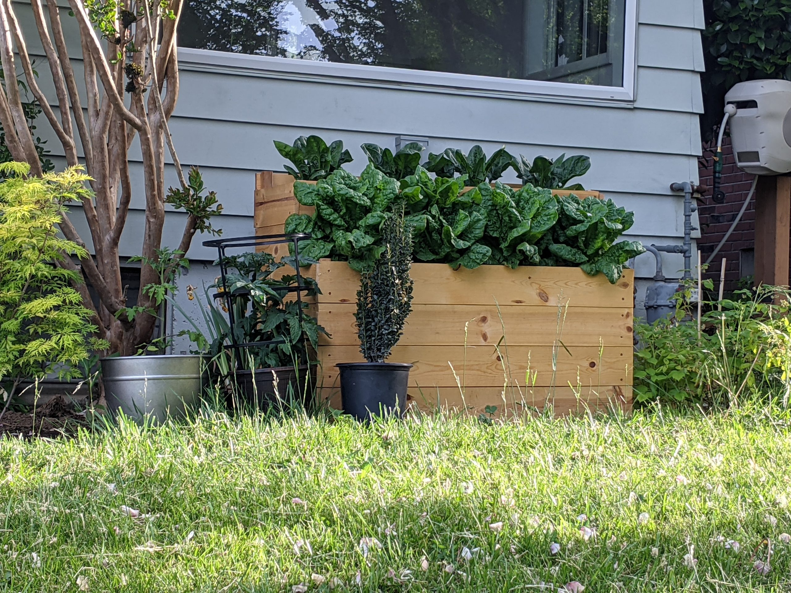 kale and chard grow out of a small wooden bench