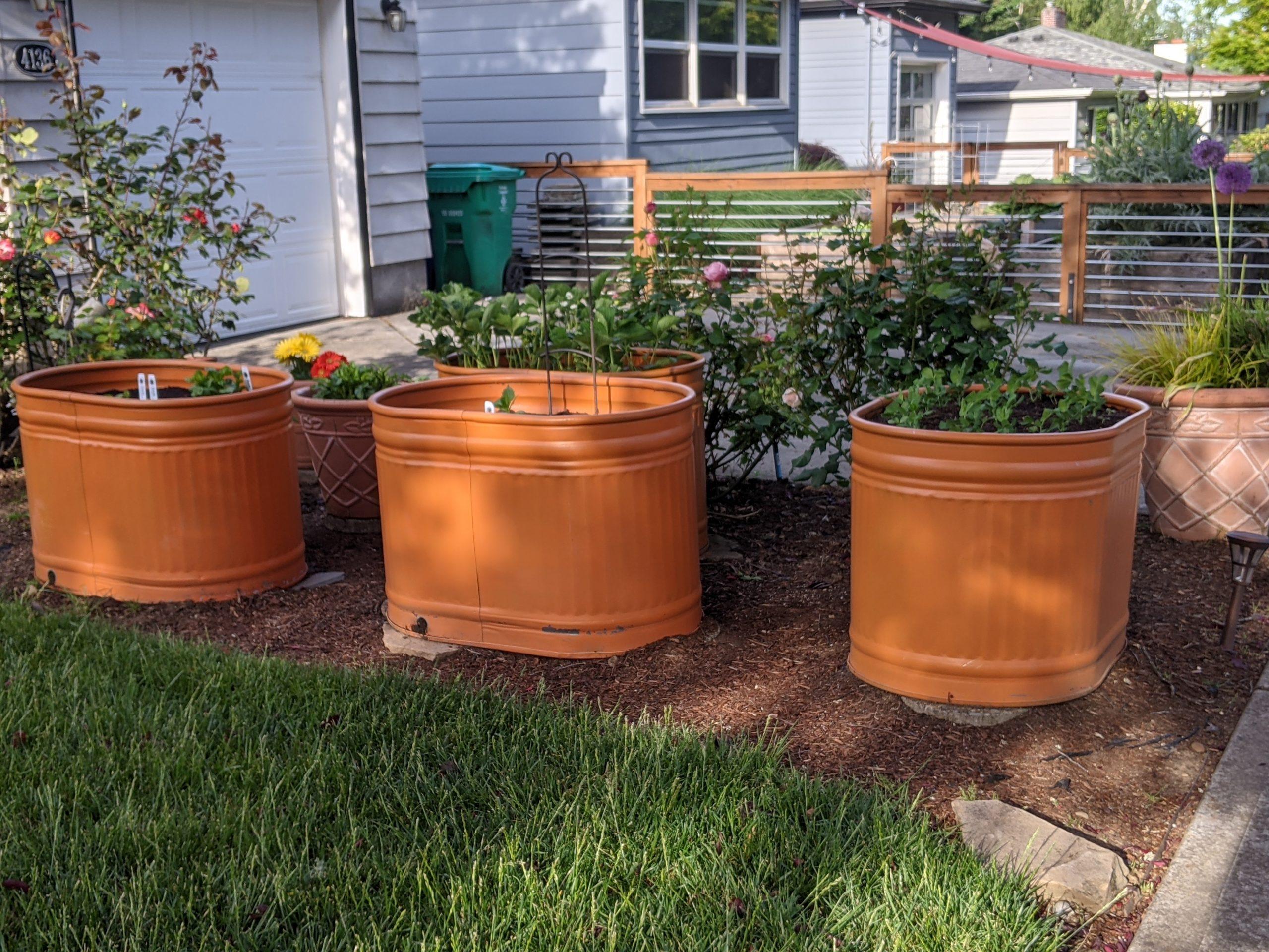 vegetables grow in orange watering troughs