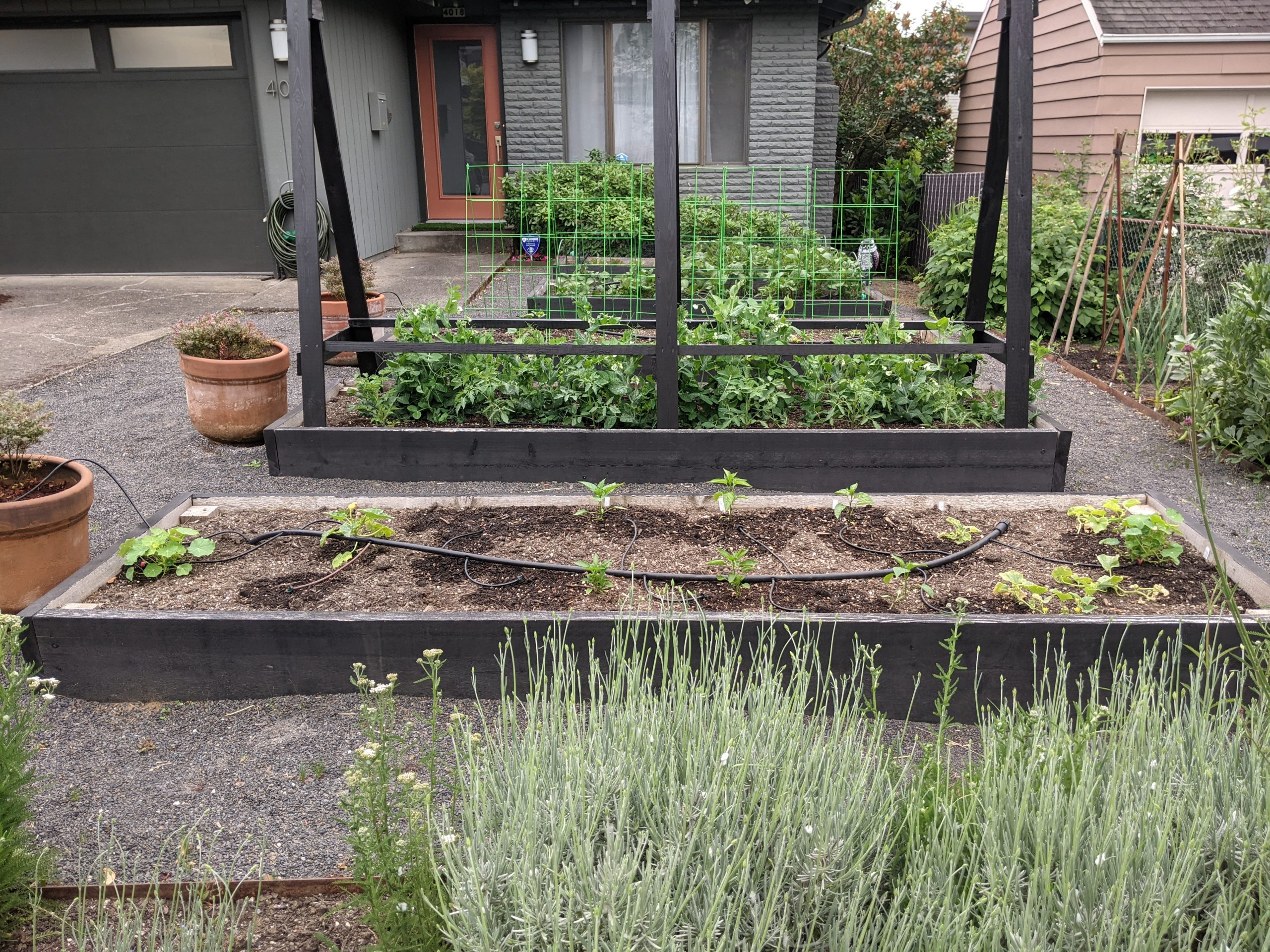Large raised beds in front of gray house with orange door